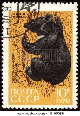 Black Bear On Post Stamp