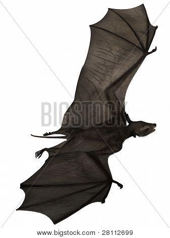 Icaronycteris - 3d Dinosaur