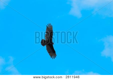 Flying Bird On Blue Sky