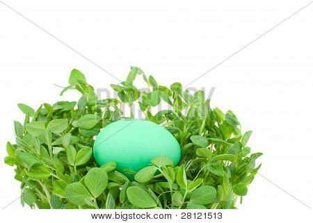 Sprouts and egg