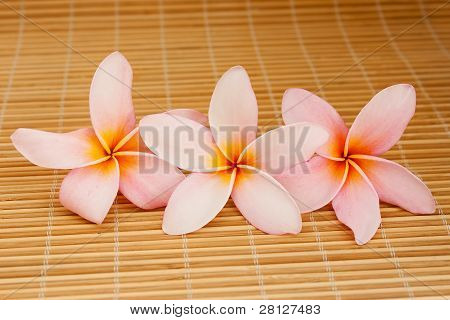 Row Of Tropical Plumeria On Bamboo Mat For Spa And Wellness Concept