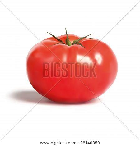 Tomato.eps