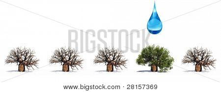 High resolution conceptual row of 3D trees without leafs and one green summer or spring tree with a water drop falling. A banner ideal for winter,business,grow or education designs isolated on white