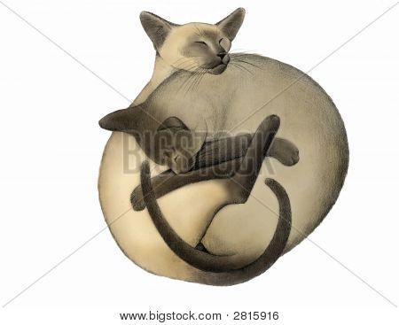 Yin Yang Siamese Cats