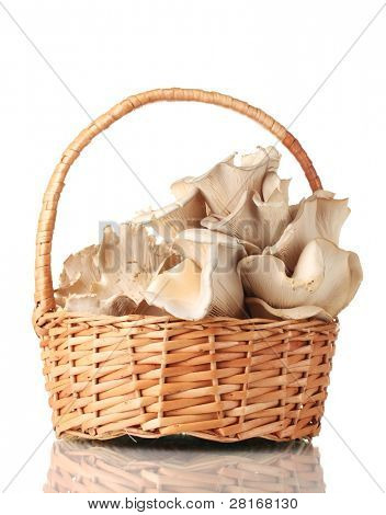 oyster mushrooms in basket isolated on white