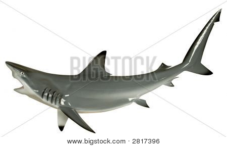 SharkBlacktip