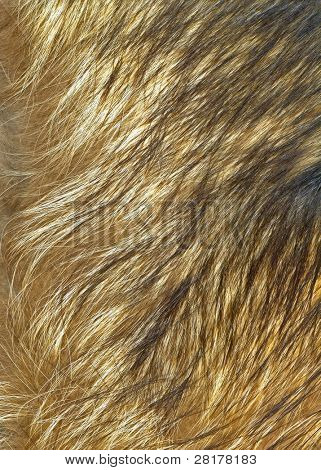 Close up wolf fur texture to background