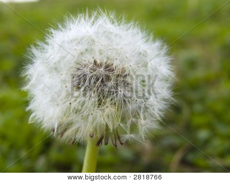 Blowing Flower In Green