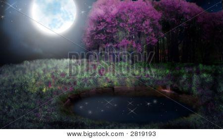 Secret Pond