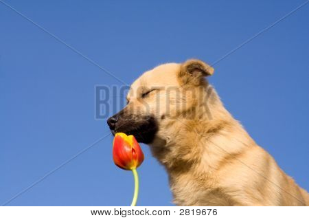 Puppy Dog Close Eyes And Smelling Tulip