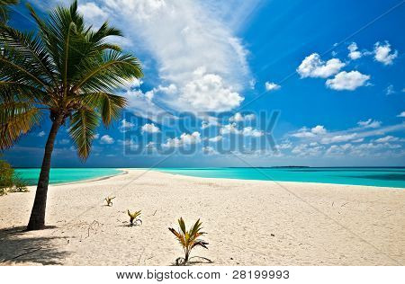 Infinity Tropical Beach