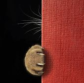 The Cat Hid Behind The Red Book. Only His Paw With Long And Sharp Claws And His Whiskers Are Visible poster