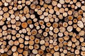Sawed Tree Trunks And Branches In Different Sizes, Piled Up In Blue Container Wood Storage Industry. poster