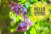 Hello Spring Banner . Greetings Of Spring. We Are Waiting For Spring. Hi Spring poster
