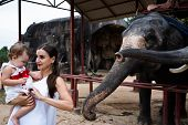 Happy Mother And Daughter Watching And Feeding Elephants In Zoo. Young Mother Feeds An Elephant With poster