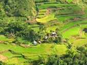 picture of ifugao  - Rice terraces village in Ifugao province Philippines - JPG