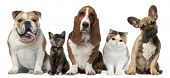 picture of tan lines  - Group of cats and dogs in front of white background - JPG