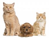 stock photo of cat dog  - Group of cats and dogs in front of white background - JPG
