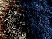 Texture Of Gray Wolf Hair Fur. Texture Of Fur. Wool Of Wolf. Wool Of Dog. poster