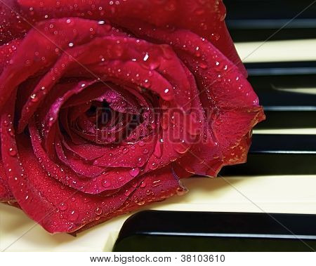 Closeup red rose with water drops