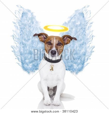 Angel Dog Feather Wings Aura Nimbus