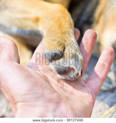Dog Paw And Human Hand
