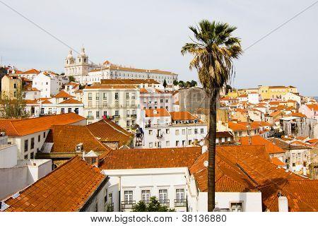 Alfama, Ancient Lisbon, Palm