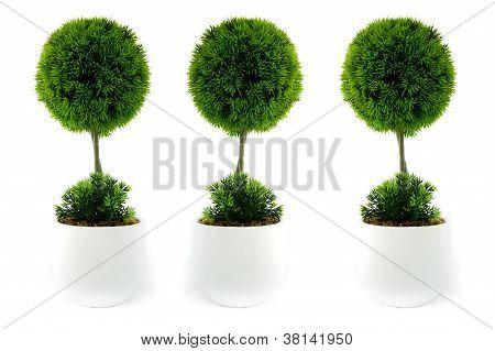 Three mini trees