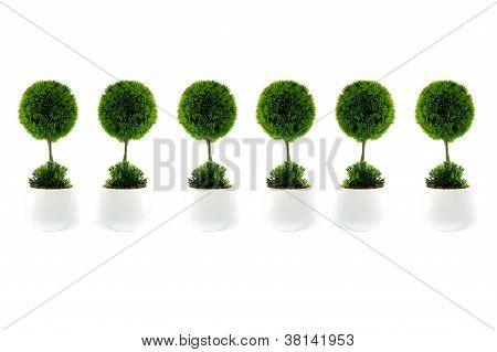 Mini tree in white pots
