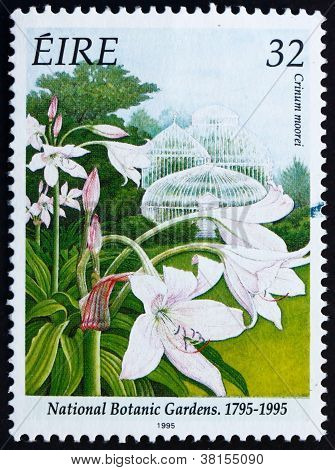 Postage stamp Ireland 1995 Natal Lily, Crinum Moorei