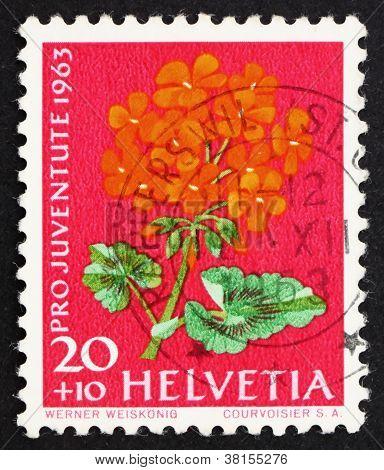 Postage stamp Switzerland 1963 Pelargonium, Flowering Plant