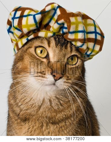 Portrait of a cat In The Hat