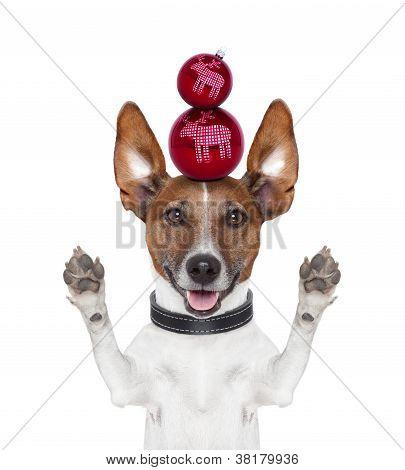 Christmas Balls Dog Paws Up