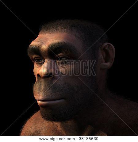Retrato de Homo Erectus