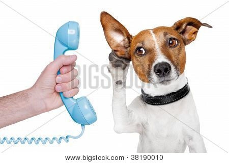 Dog On The Phone Male Hand