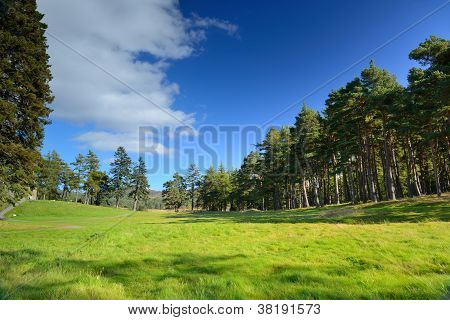 Beautiful Meadow With A Pine Tree