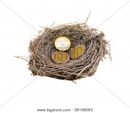 Silver Bird Nest And Euro Coins Money On White