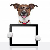 stock photo of working-dogs  - business dog tablet pc ebook computer notebook - JPG