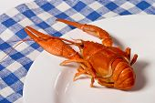 Cooked Crayfish poster