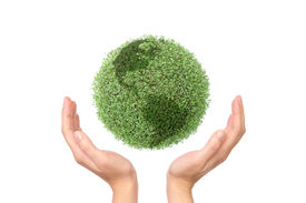 picture of environmentally friendly  - Green plant globe between two hands on white background  - JPG