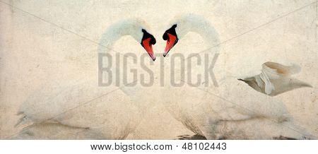 Swans heart - vintage photo