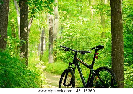 Mountain Bike on the Trail in the Beautiful Green Summer Forest