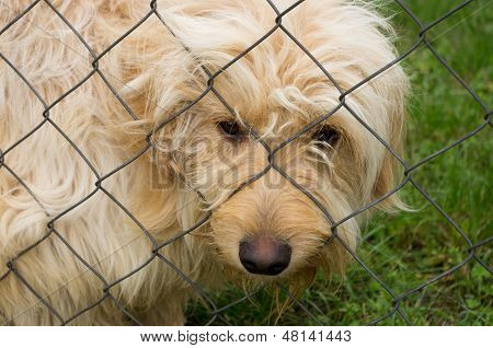 sad dog in shelter