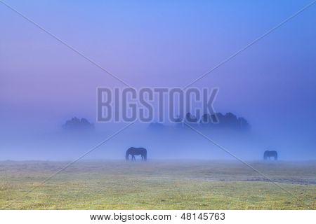 Siluetas en niebla densa de caballos pastando