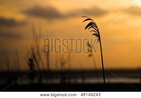 Sunset with Bay Grass