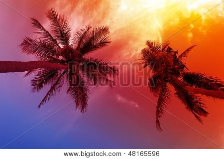 Palm tree sunset on tropical beach