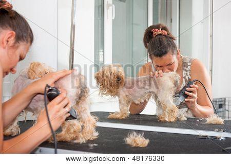 Female groomer haircut Yorkshire Terrier
