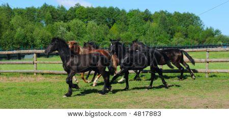 Flock Horse