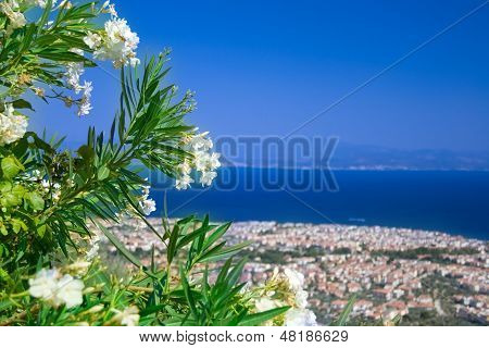 White Flowers With City View