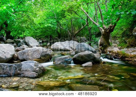 Stream With Gray Stones And Tree